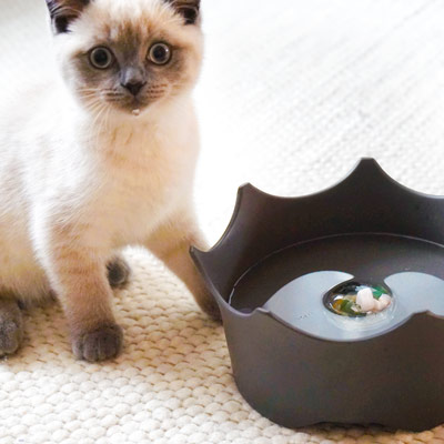 crownjuwel pet bowl cats and dogs