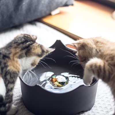 crownjuwel pet bowl for cats and dogs